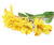 Artificial 74cm Single Stem Yellow Peruvian Lily - Closer2Nature