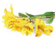 Artificial 74cm Single Stem Yellow Peruvian Lily Closer2Nature