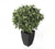 Artificial 2ft Variegated Weeping Fig Tree - Closer2Nature