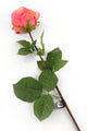 Artificial 72cm Single Stem Fully Open Coral Pink Rose