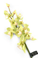 Artificial 84cm Single Stem Green Cymbidium Orchid - Closer2Nature