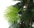 Artificial 6ft Finger Palm Tree - Closer2Nature