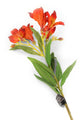 Artificial 74cm Single Stem Deep Orange Peruvian Lily - Closer2Nature