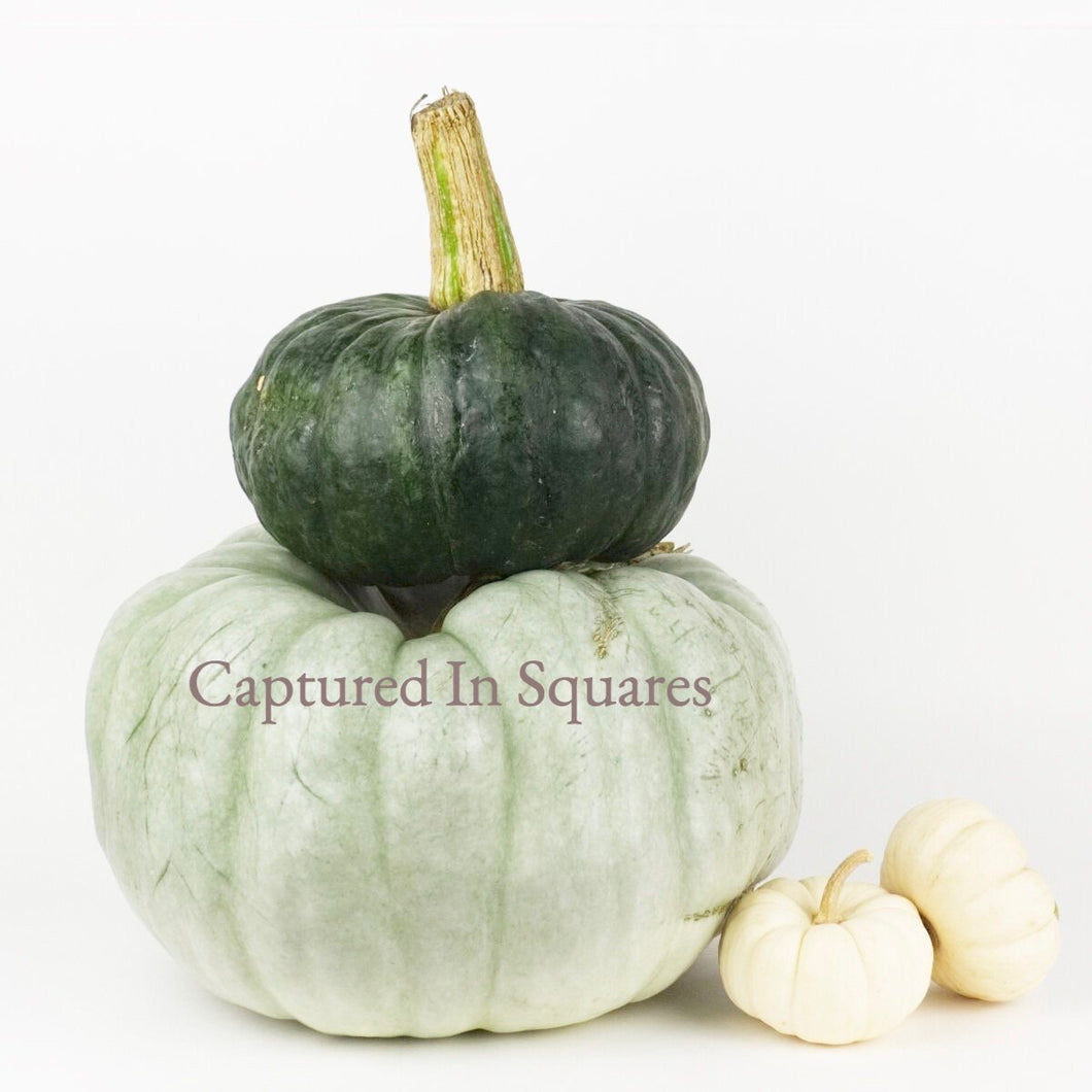 Grey, Green, and White Pumpkins
