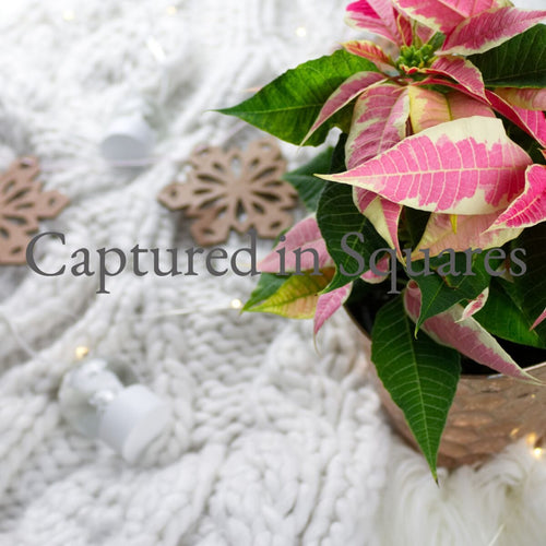 Poinsettias and Ornaments 3