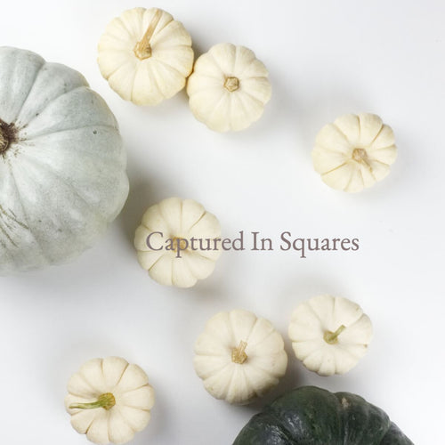 Green, Grey and White Pumpkins