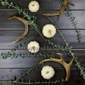 Pumpkins and Antlers 3