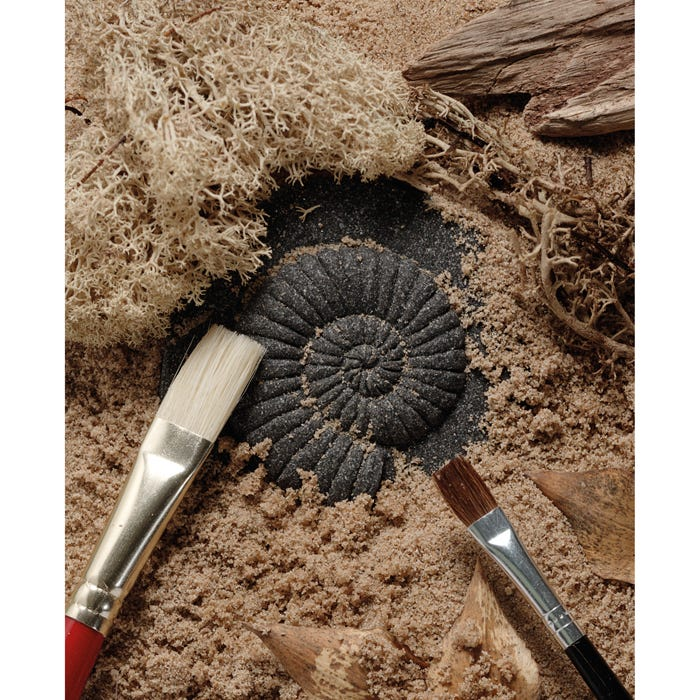 Play and Explore Fossils Set
