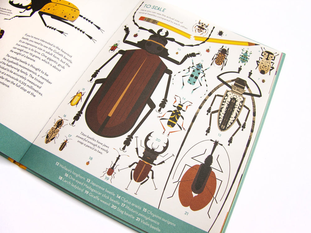 Bonkers About Beetles | Owen Davey