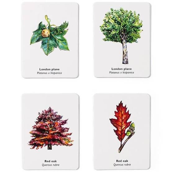 Match a Leaf | A Tree Matching Game
