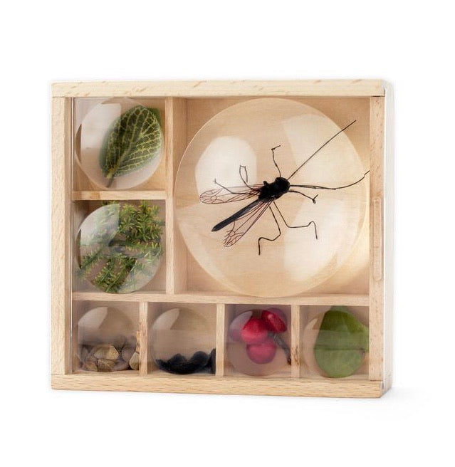 Huckleberry Magnifying Bug Box