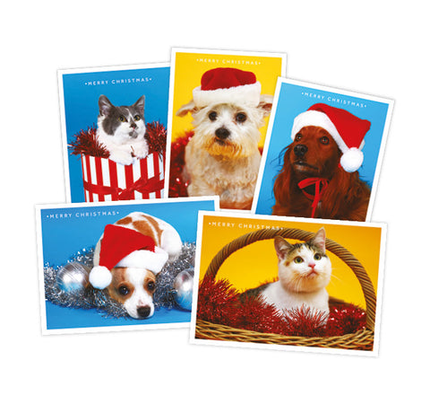 12 Strays of Christmas Cards