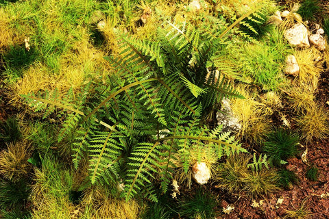MODEL SCENE VG3-030 Bracken Fern 1:32/1:35 Scale