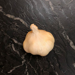 Large Garlic - Bulb