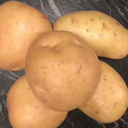 Large Baking Potatoes