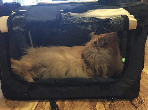 Luggage - Some of our Furry Friends!