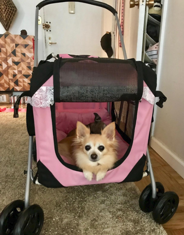 Stroller - Some of our Furry Friends!