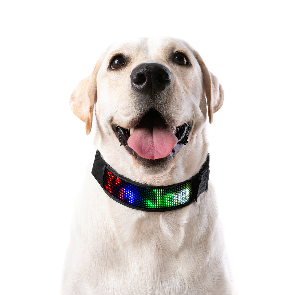 "PetLuv ""Digital Dog"" Programmable Scrolling LED Dog Collar Illuminated for Safety & Nighttime Multi-Colored Text & Graphics App Controlled"