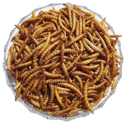 Straights Dried Mealworms