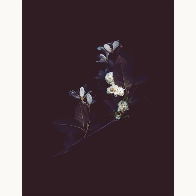 BOUQUET NO 2 - NOCTURNE