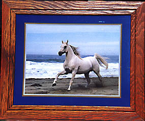 White Stallion at the Sea