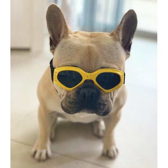 Dog Sun Doggles YELLOW