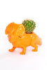 Susan The  Triceratops Planter SOLD OUT
