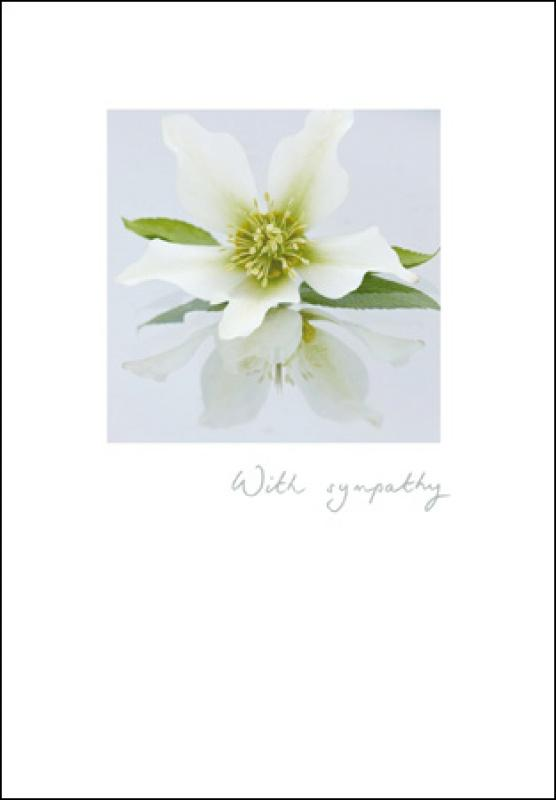 With sympathy Hellebore card - Daisy Park