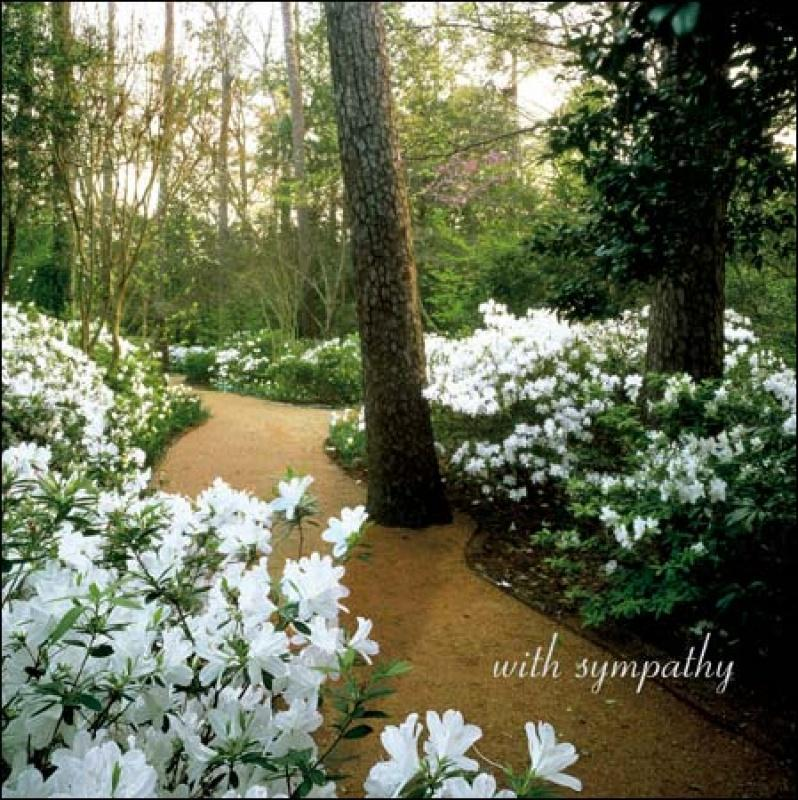 The White garden Sympathy card - Daisy Park