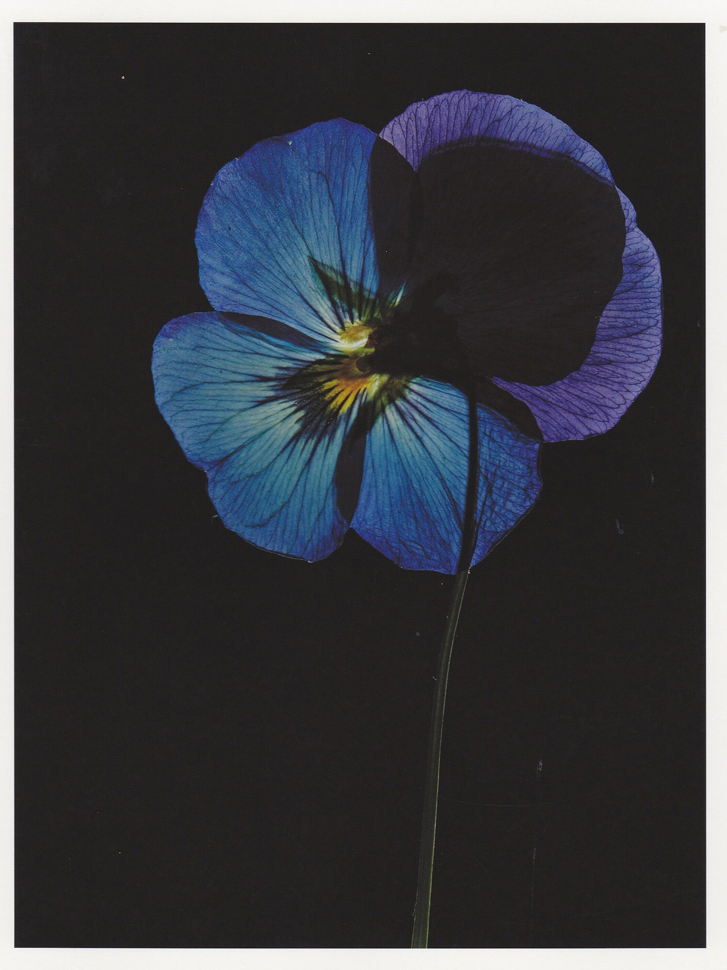 Pressed flowers with Robin Broadbent