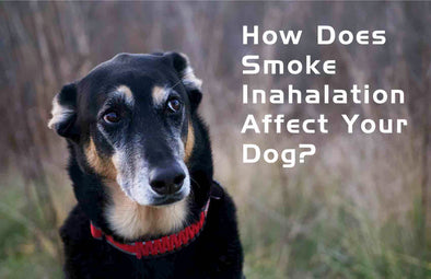 How Does Smoke Inhalation Affect Your Dog?