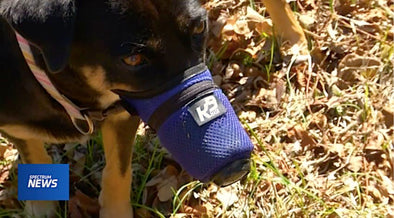 Spectrum News Report - World's First Air Pollution Mask for Dogs