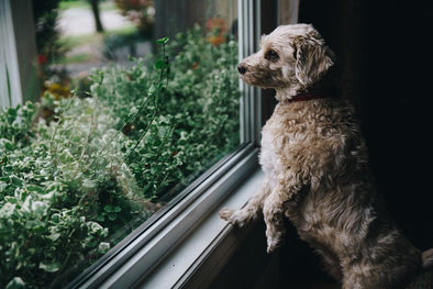 Protecting Your Dog's Health From Air Pollution