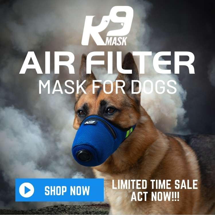 Air Filter for Dogs in Wildfire Smoke with a K9 Mask