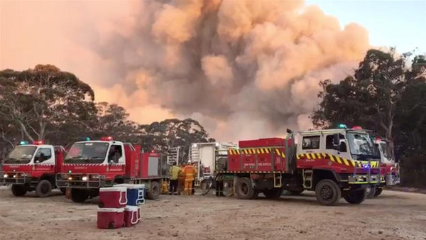 Australian brushfire smoke affects pets and dogs respiratory system