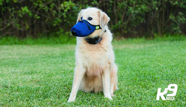 Pets and Dogs Wildfire Smoke Pollution Mask