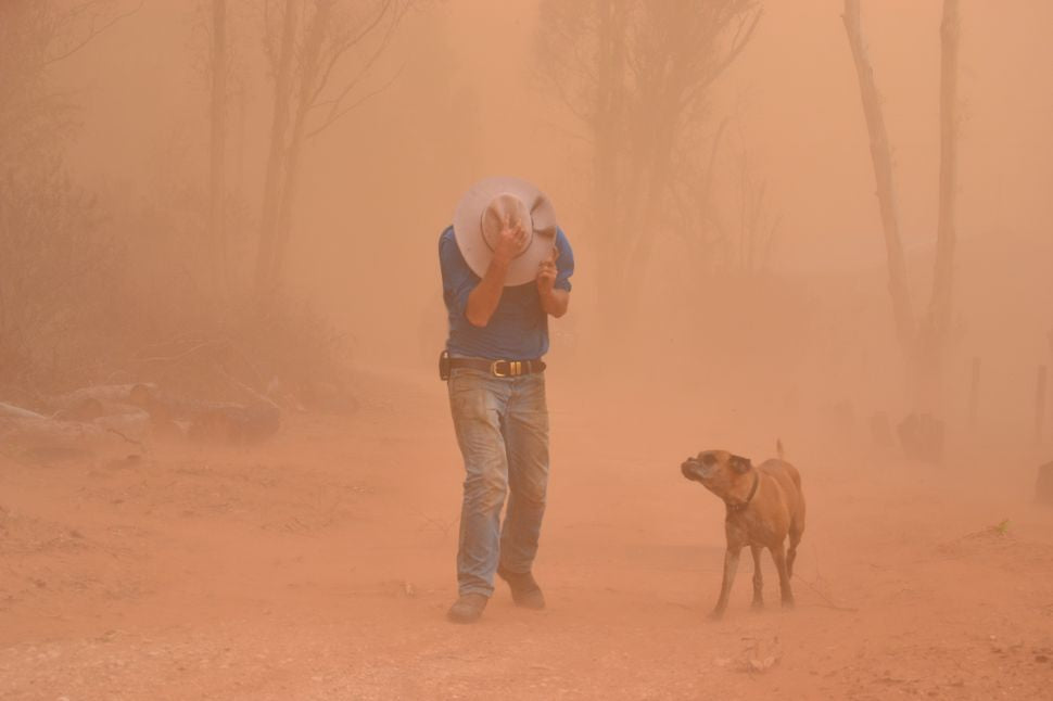 Dog in a Dust Storm During High AQI Index