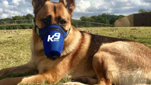 Air Respirator Mask for Dogs to Purify Smoke, Dust, Pollution in Air