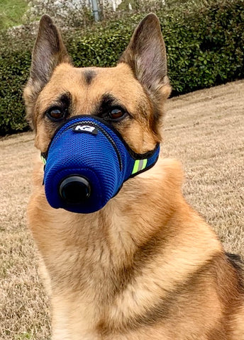 Filtre anti-pollution pour chien K9 Masque Image Photo Max