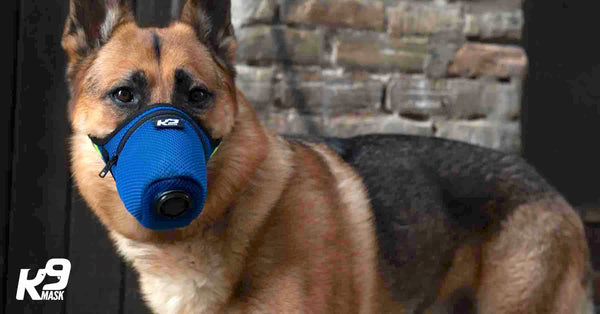 K9 Mask® Air Pollution Gas Filter Mask for Dogs