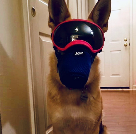 K9 Mask for dogs with doggles and rexspecs