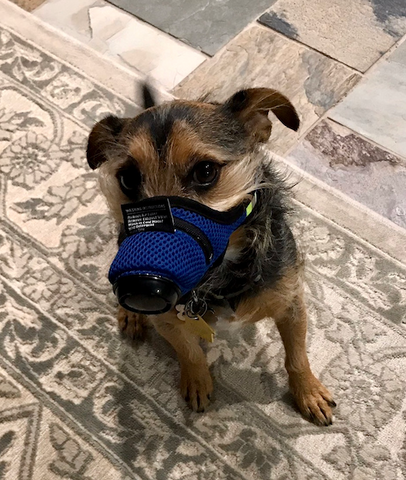 K9 Mask Air Filter Image Customer Photo Small