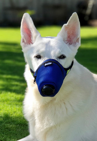 K9 Mask Dog Pollution Filter Image Photo Διάσωσης