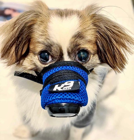 K9 Mask Dog Pollution Air Filter Image Foto