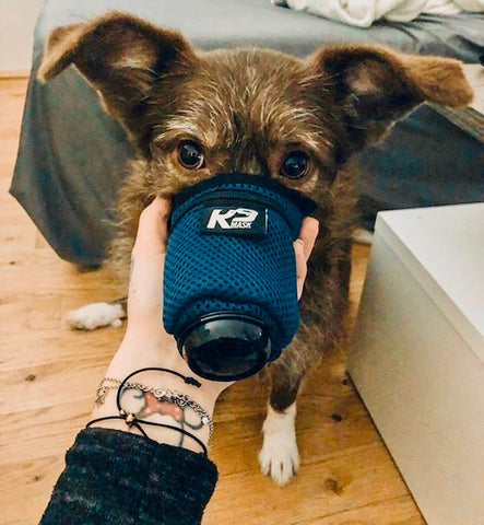 K9 Mask Dog Pollution Filter Image Foto