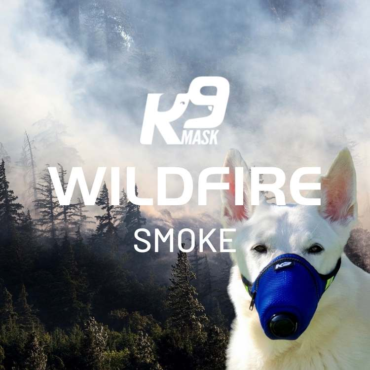 Dogs in Wildfire Smoke PM2.5 Particles Use K9 Mask Air Filter for Dogs