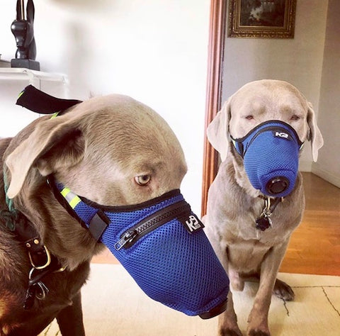 K9 Mask Photo Photo Labradors πελάτη