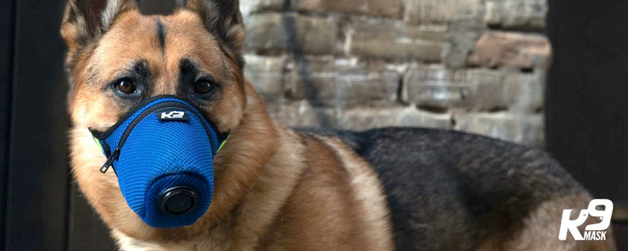 K9 Mask N95 Air Filter Dog Pollution Gas Mask