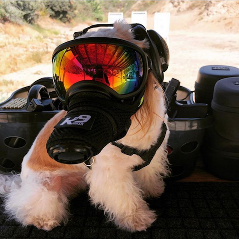 K9 Mask on gun range protection