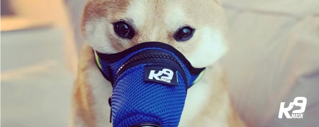 K9 마스크 리뷰-Dog Air Pollution Filter Mask